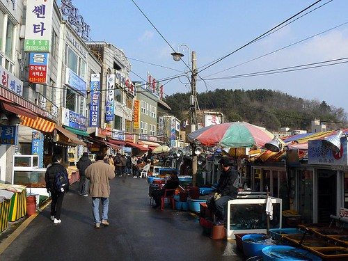 Korea (617)