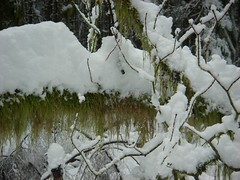 Moss and snow on branch