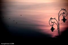 The Dark Coming (Anurag Prashar) Tags: sunset birds ominous gothic lamppost anurag interestingness438 i500 prashar ilovemypics explore20080126