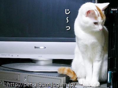 ミア(猫)の写真1