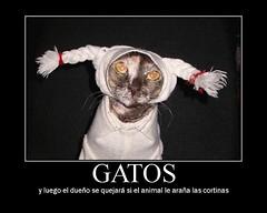gatoColetasCartel (fatanaes4) Tags: motivator eol