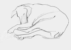 No 73 Oh look, Heidi's sleeping (Nu Scot) Tags: dog pet monochrome mammal sketch mutt ebay nap drawing sleep auction hound canine line tired snooze mansbestfriend pooch doze gsp germanshorthairedpointer companionanimal domesticatedanimal dailydraw2008