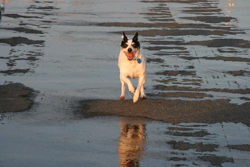 Dexter running