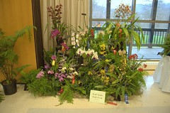 South Carolina Orchid Society Display