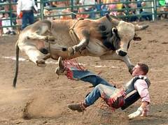 sliding under the bull