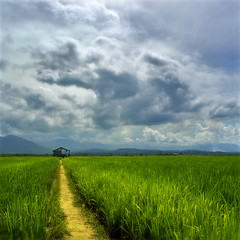 Golden Path (Jeremy-G) Tags: blue sky mountain green field clouds canon square afternoon paddy path horizon kitlens soil sabah hdr kudat resthouse firstquality 400d omgmastershot