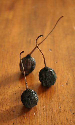 stemmed seedpods