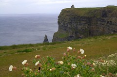 flora at Cliffs of Moher (cosmic[SGA]) Tags: ireland nikon irishcountryside d40 ruralireland martinakrizikova irishwestcoast