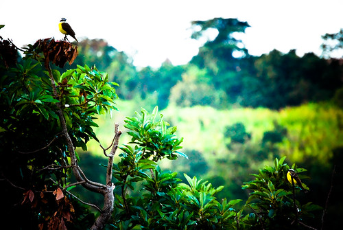 two of a kind [birds] de fmafra no Flickr em CC