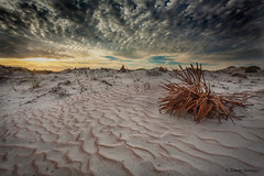 Design by the wind. (Diseñado por el viento). (Samuel Santiago) Tags: dunes beach dryplant sunrise sand design pattern smyrnadunespark newsmyrnabeach florida morning digital volusiacounty canon5dmkii canonef1740mmf4l lightroomcc googlenikcollection colorefexpro4 clouds