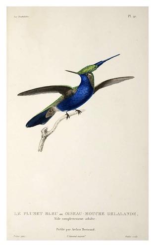 027-Les Trochilidées ou les Colibris et les Oiseaux-Mouches… 1832- René Primevère Lesson- DGZ–Göttinger Digitalisierungszentrum