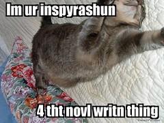NaNoWriMo KittyBoo LOL Muse