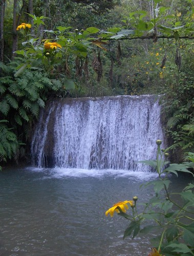 Waterfall and Sunflowers