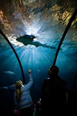 H...h...h...haai! (KennethVerburg.nl) Tags: zoo aquarium shark rotterdam blijdorp haai dierentuin oceanium