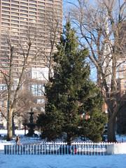 Boston Common Christmas tree