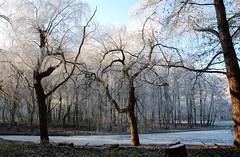 Bijlmerpark 22 december '07. (Athanassia) Tags: park trees winter amsterdam bomen frost hoarfrost rijp bijlmerpark