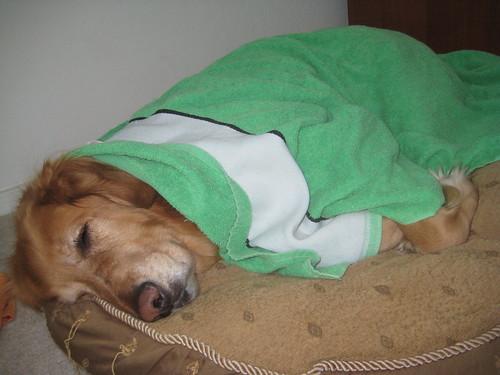 Cason Napping