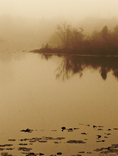 Fog On Still Waters