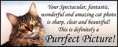 Purrfect Pictures COMMENT Code