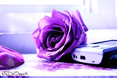 } (Weda3eah*) Tags: pink its rose nokia office 4 n someone p qatar flawer n95 mpbille wadooo3ah