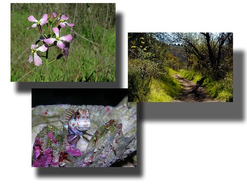 Spring walk1