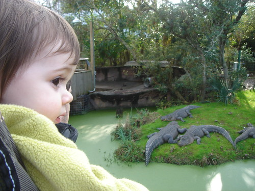 Etta and alligators
