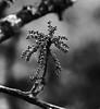 Oak Life (edwardleger) Tags: tree nature oak louisiana 2008 mywinners betterthangood theperfectphotographer edwardleger exquisiteimage edwardnleger