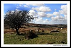 (reallyreallyrosie) Tags: uk england wall canon puddle eos spring kiss sheep farm devon signpost dartmoor dartmoornationalpark 400d rebelxti reallyreallyrosie diamondclassphotographer flickrdiamond copyrightpaulawakehammarch2008 moorcare