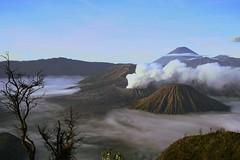 Bromo (Farl) Tags: mountain mountains cold fog clouds sunrise indonesia volcano java smoke caldera volcanoes gunung range jawa bromo semeru active tengger batok eastjava jawatimur bluelist probolinggo
