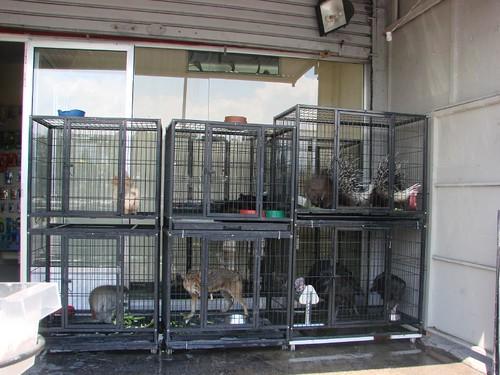 Animali in vendita
