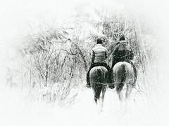 Promenade des amoureux (Amiela40) Tags: chevaux promenade hiver winter forest forêt neige snow couple amoureux deux