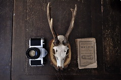 (Sofi Anne) Tags: camera old vintage french skull book pentax deer antlers