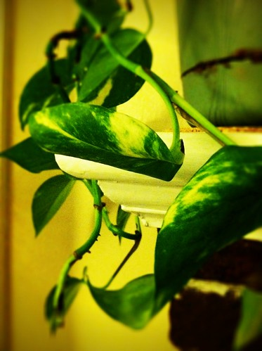 [157/365] Indoor Plant by goaliej54