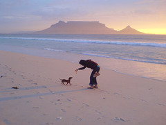 Crab bite (mallix) Tags: city sunset summer dog sun beach clouds table southafrica evening bay sand warm waves colours bright cloudy dusk walk crab calm dachshund feed worldcup tranquil tablemountain soothing 2010 tableview sausagedog windless seabreeze soccerworldcup worldcup2010 fifa2010