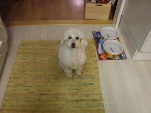 Ska jag hjälpa dig med maten?