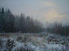 03-11-2007 ([ Petri ]) Tags: snow espoo finland firstsnow ensilumi frostbites blackribbonbeauty myforestbackyard laitmanintie