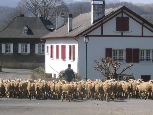 Transhumance au pays basque by fredpanassac.