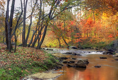 Broad Creek just east of Lake Lure, North Carolina (h_roach) Tags: trees orange october fallcolors northcarolina changing blueridgemountains folage lakelure naturescall golddragon treeofhonor treeofhonor2