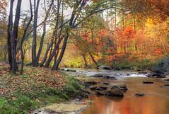 Broad Creek just east of Lake Lure, North Carolina (h_roach) Tags: trees orange october fallcolors northcarolina changing blueridgemountains folage lakelure naturescall golddragon treeofhonor treeofhonor2