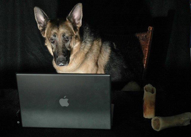 dog using a computer German shepherd