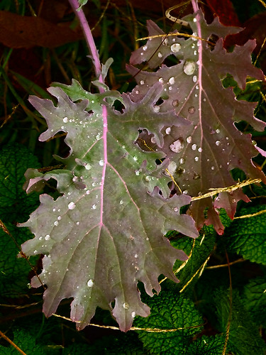 leaves with water drops 1.jpg