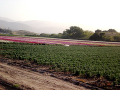 P5050117.JPG (Gail Chris Spinks) Tags: florafauna