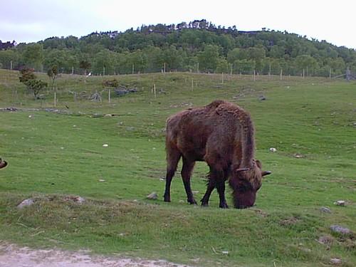scotland - wild animal park