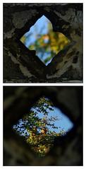 Portal Diptych 2 (lovestruck.) Tags: closeup fdsflickrtoys diptych view framed depthoffield portal through challengeyouwinner pentaxk10d