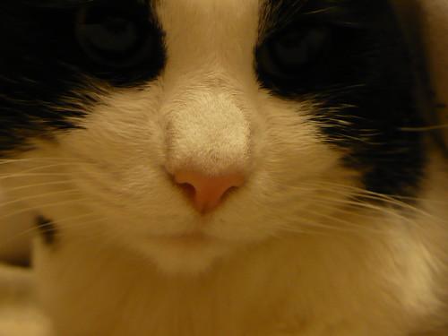 """19-12-07 """"Pink nose"""""""