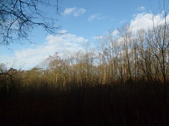 leigh woods view (dandavie) Tags: trees sky clouds forest dark woods leighwoods