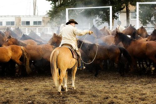 gathering mares 191