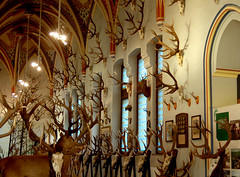 Amazing Antler Collection