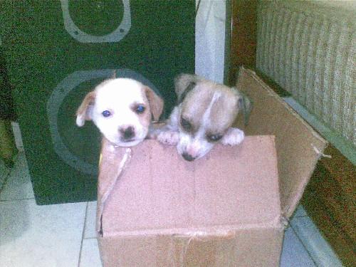 perritos_caja
