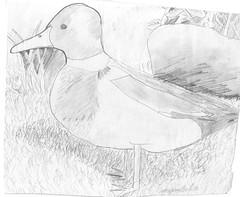 duck_1992sm